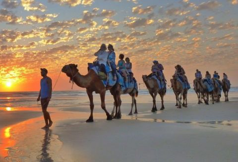 Broome Safari Camel Ride