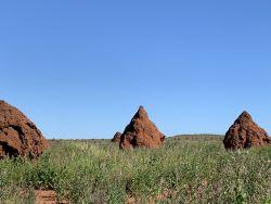 Peedamulla campground Termites